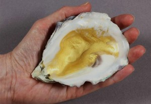 The final product: finely powdered gold pigment stored in an oyster shell.