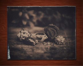 Photograph of shells and fossils, wet-plate collodion on glass, taken by me on the workshop.